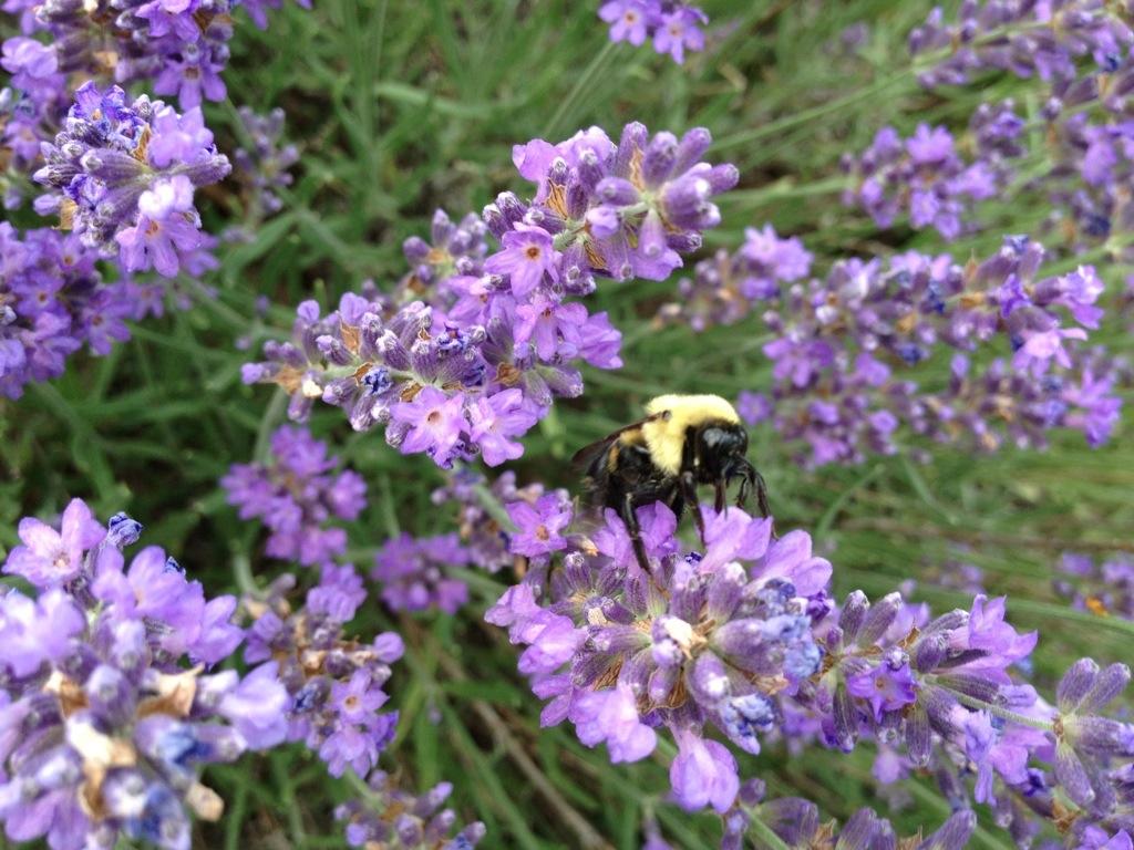 Bumbling Bumble Bee – June18th