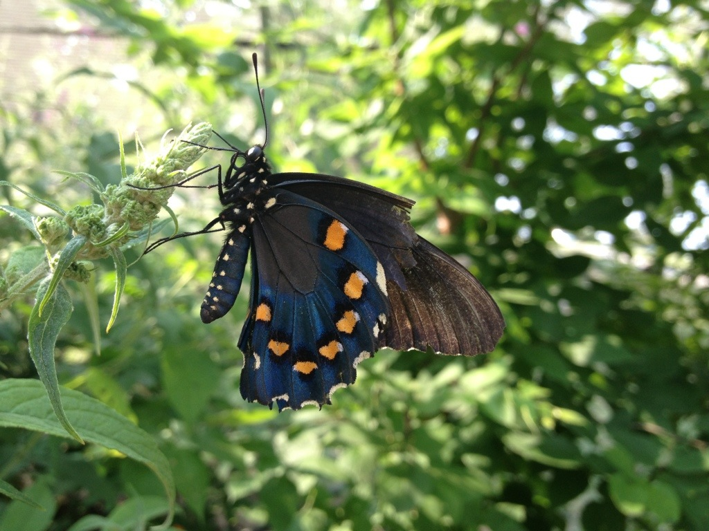 Butterfly House – July8th