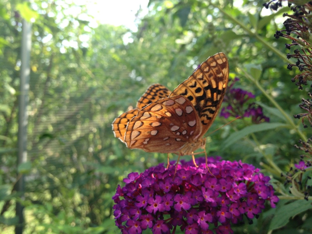 Butterfly House 4 – July 10th