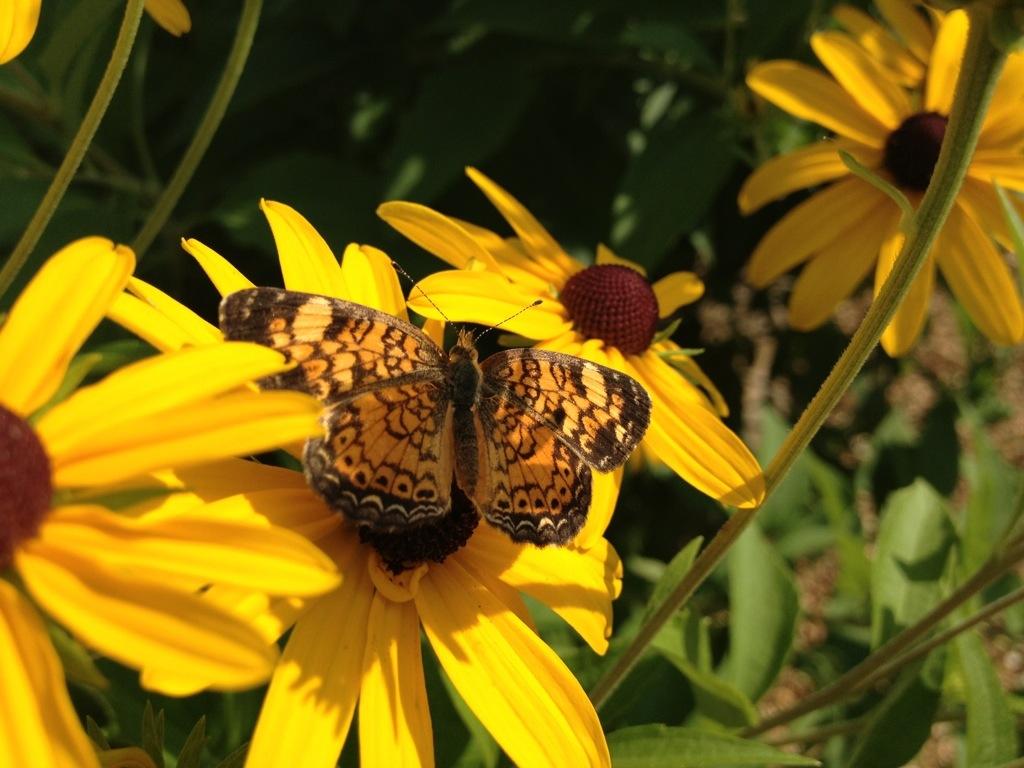 Butterfly Garden – August20th