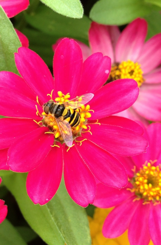 Flowers and Bees – September 5th